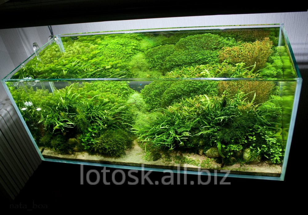 Заказать Дизайнерское оформление аквариумов