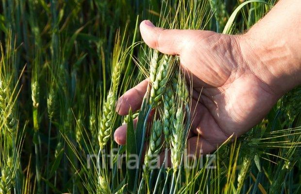 Заказать Консультации агронома, консультации в сфере агро-бизнеса