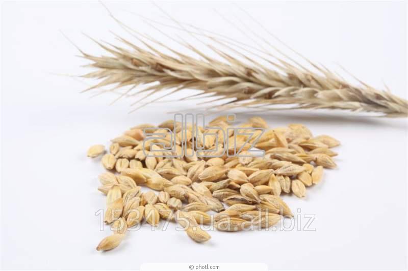 Заказать Импорт, обработка и продажа семена кукурузы, сои, пшеницы и ячменя с лучшей генетикой
