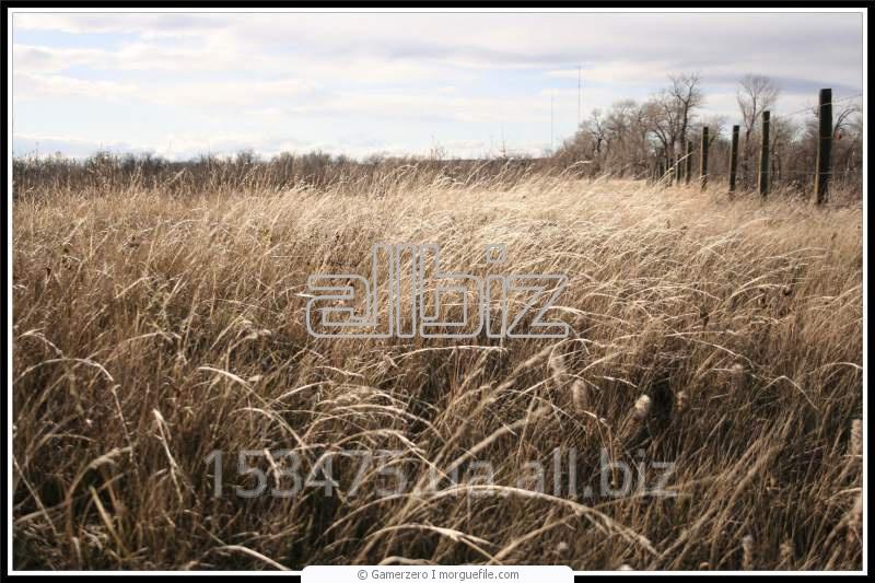 Заказать Оптовая торговля зерновых и маслянистых культур собственного производства