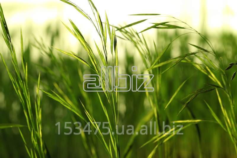 Заказать Грин Экспресс дистрибьютор средств защиты растений, пестицидов и гербицидов