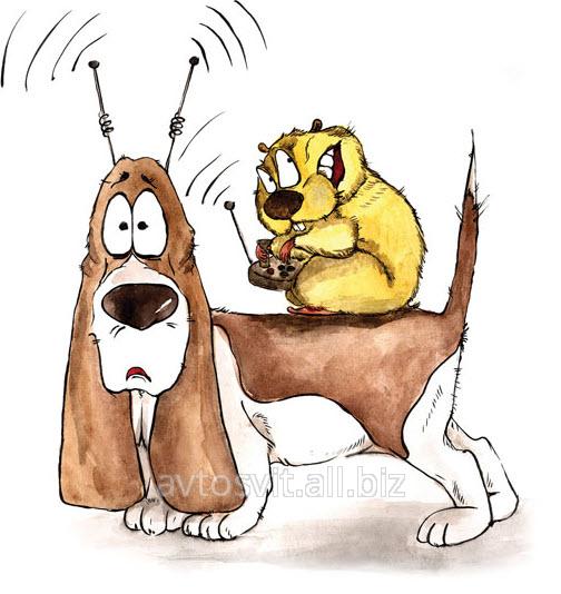 Заказать Официальные представители фирмы Байер (Германия) по чипированию животных