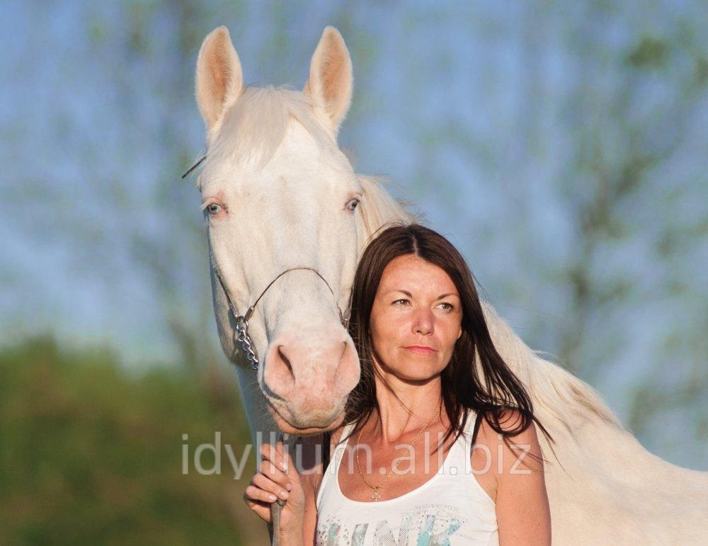 Заказать Фотосессии с лошадьми и собаками