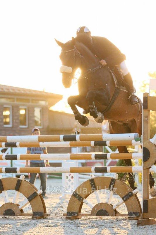 Заказать Треннинг лошадей для конкура