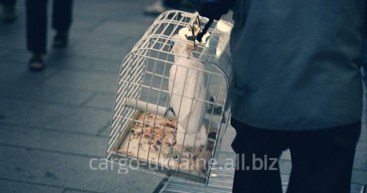 Транспортировка птиц международная