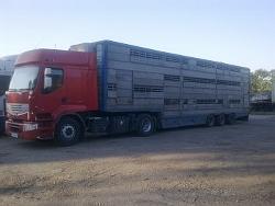Заказать Перевозка крупного рогатого скота