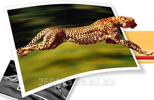 Заказать Широкоформатая печать на пленке самоклеящейся (глянец/матовая/прозрачная), экосольвент 720х1440 dpi