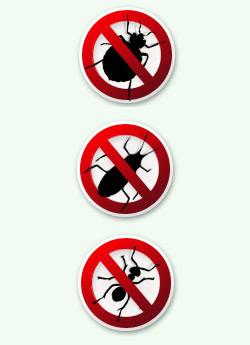 Заказать Уничтожение тараканов,клопов