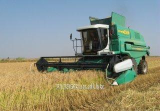 Заказать Уборка зерновых услуга