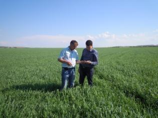 Заказать Диагностика и Моделирование агробизнеса