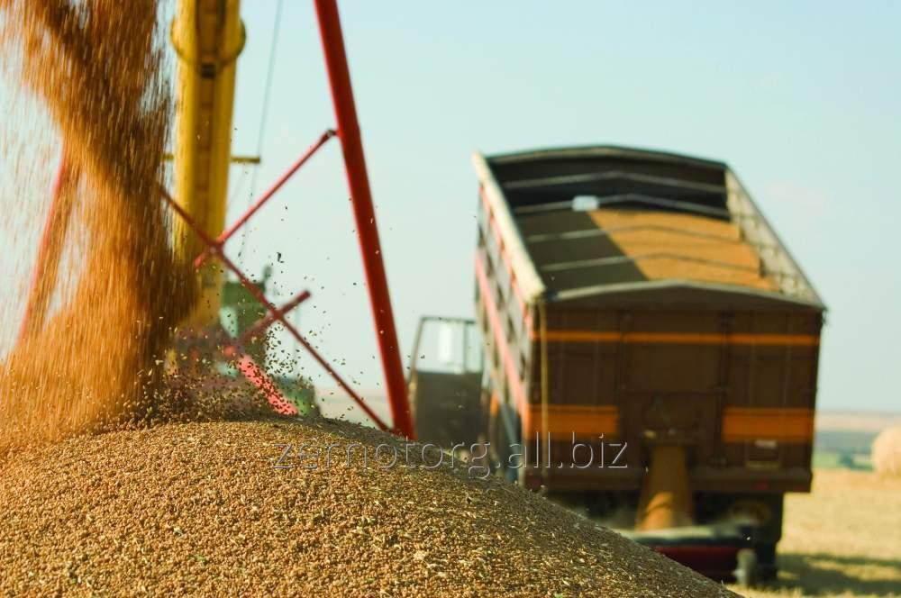 Заказать Услуги перевозки зерновых