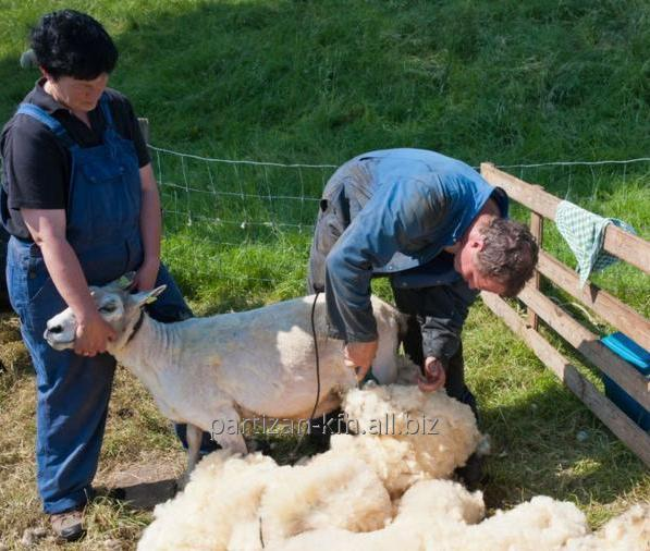 Заказать Стрижка овец