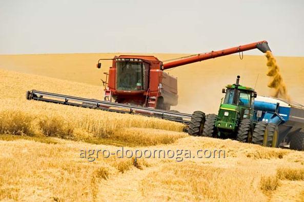 Уборка урожая зерновыми комбайнами