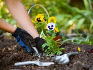 Заказать Садоводство