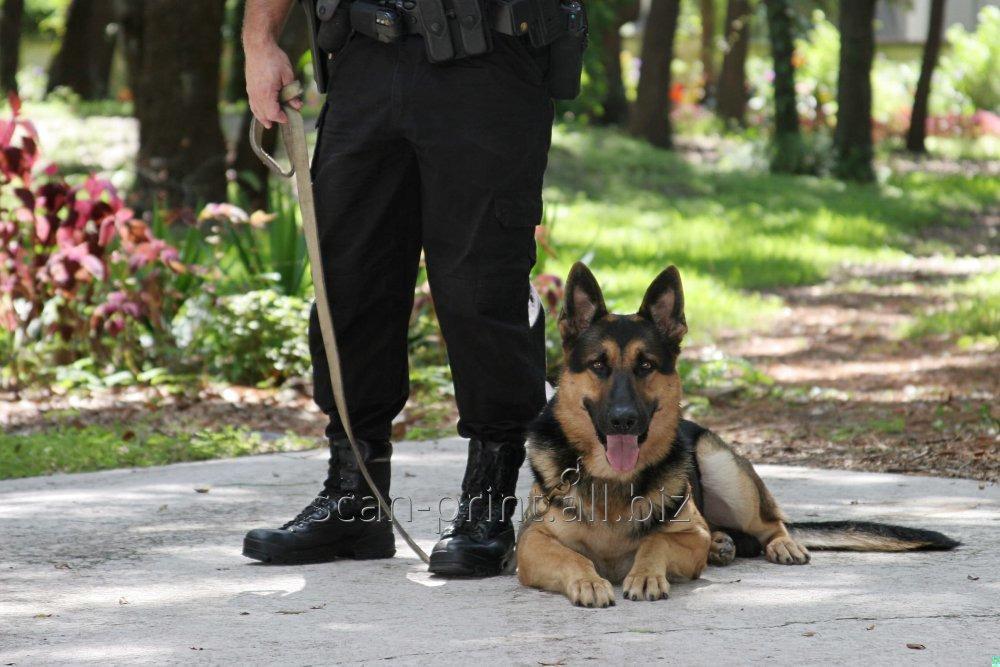 Заказать Охрана объекта с использованием служебных собак