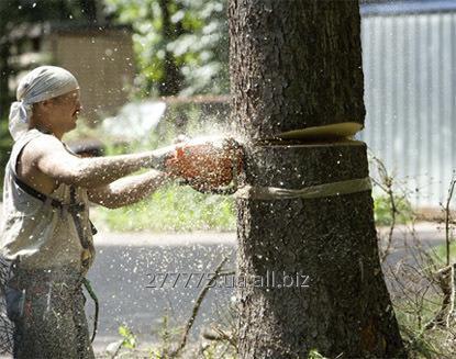 Заказать Покос травы скос сорняка спил дерева земляные работы газон.Уборка участков