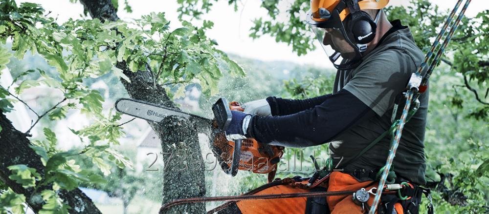 Заказать Бесплатно уберем деревья