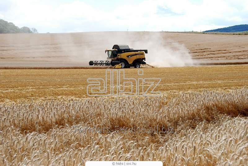 Заказать Экспорт агропродукции (зерновые, рапс, овощи) на условиях перепродажи фьючерсных и форвардных контрактов