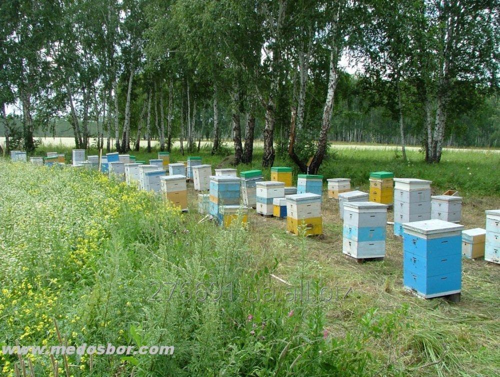 Заказать Опыление сельскохозяйственных культур пчелами