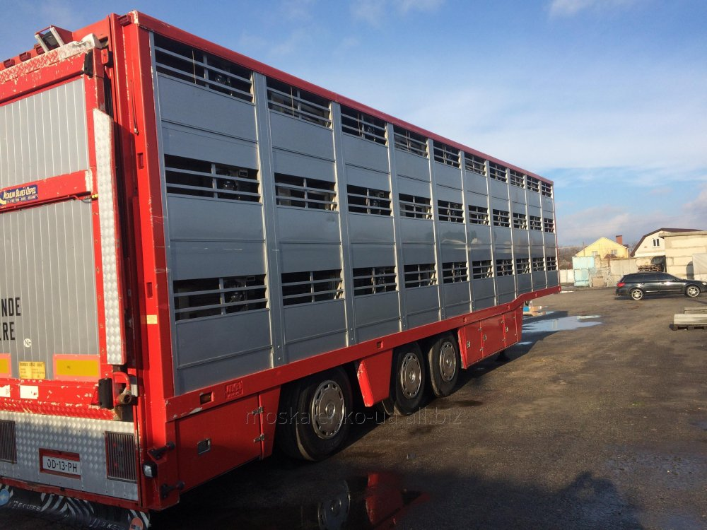 Перевозка свиней  скотовозом в Украине