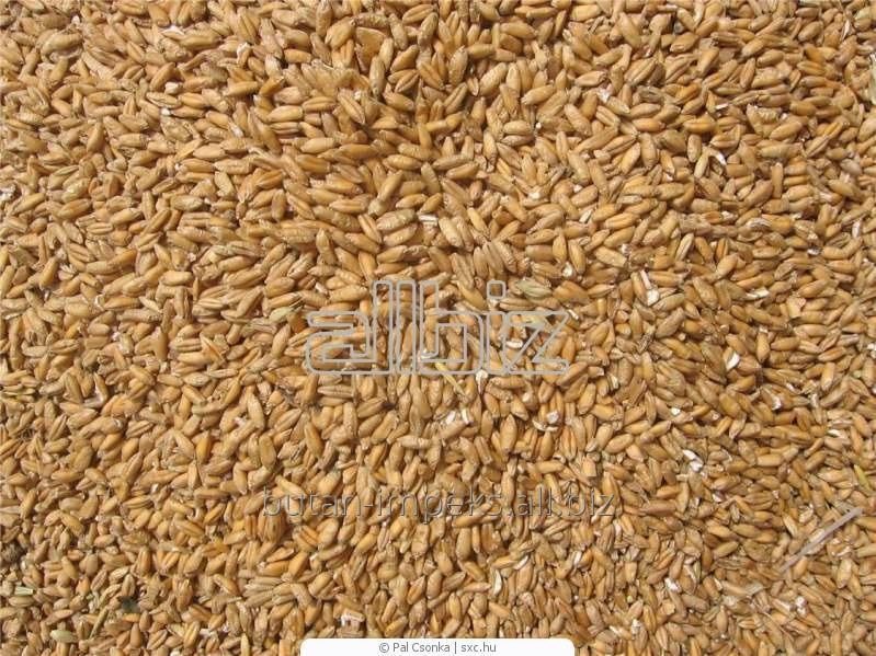 Заказать Переработка зерновых и пшеницы