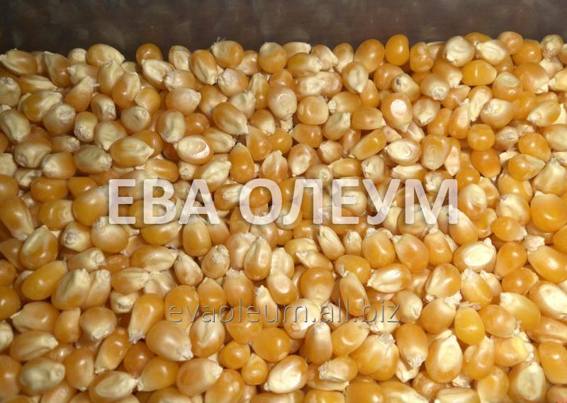 Заказать Послуги з сушки зернових: кукурудза, соя, соняшник, рапс