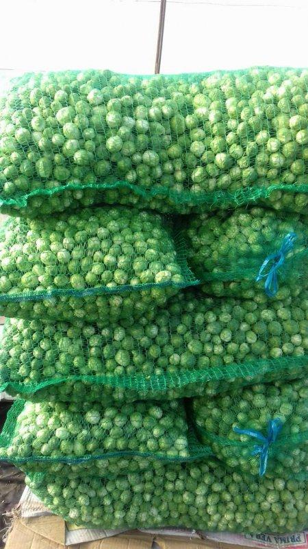 Заказать Выращивание капусты брюссельской