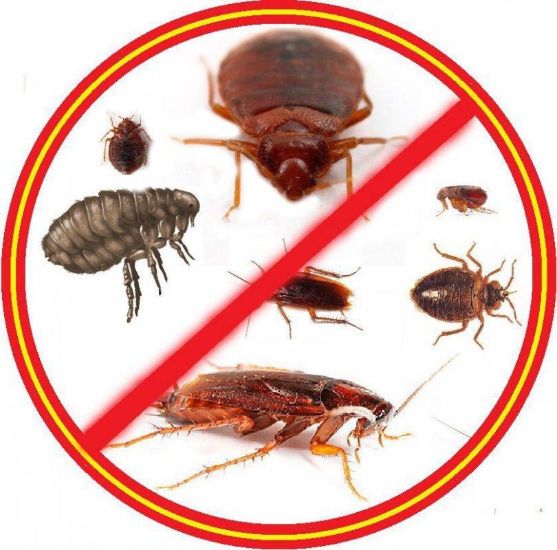 Заказать Выведение насекомых Краматорск
