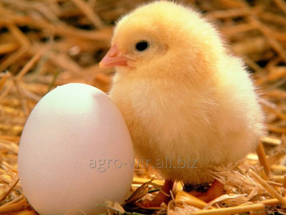 Заказать Инкубация яиц