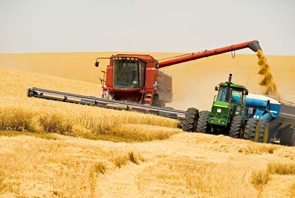 Заказать Комбайн в аренду с нашим комбайнером уборка урожая на договорных условиях