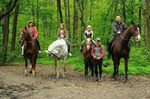 Заказать Индивидуальная конная прогулка