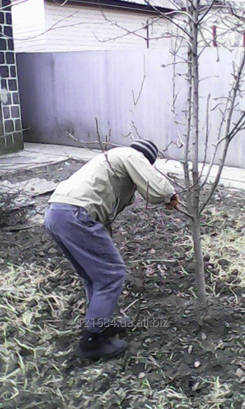 Заказать Подрезка фруктовых деревьев в Донецке