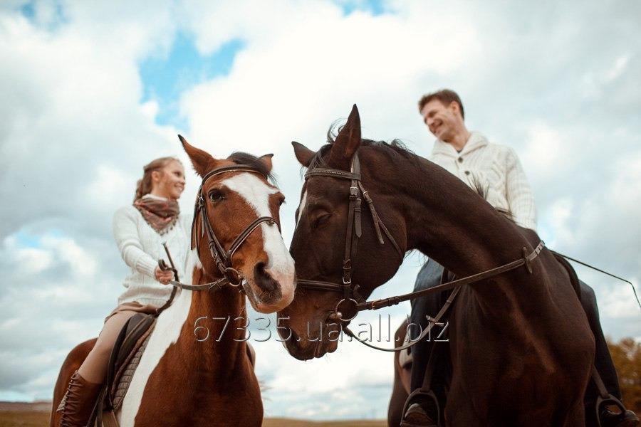 Заказать Верховые конные прогулки