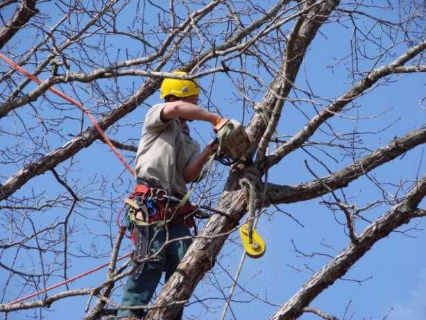 Заказать Спил и обрезка деревьев. Арбористика. Промышленные альпинисты
