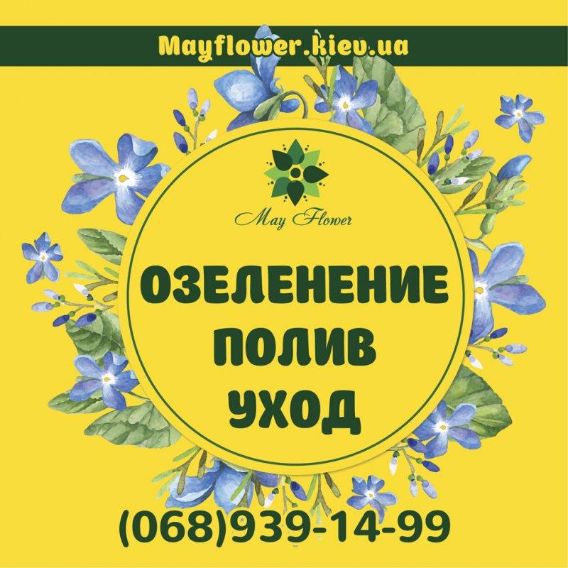 Заказать Уход за садом, озеленение, услуги садовника, посадка и обрезка деревьев