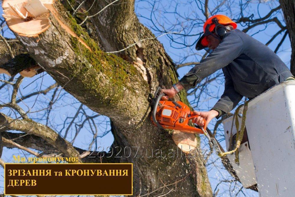 Заказать Срезание деревьев