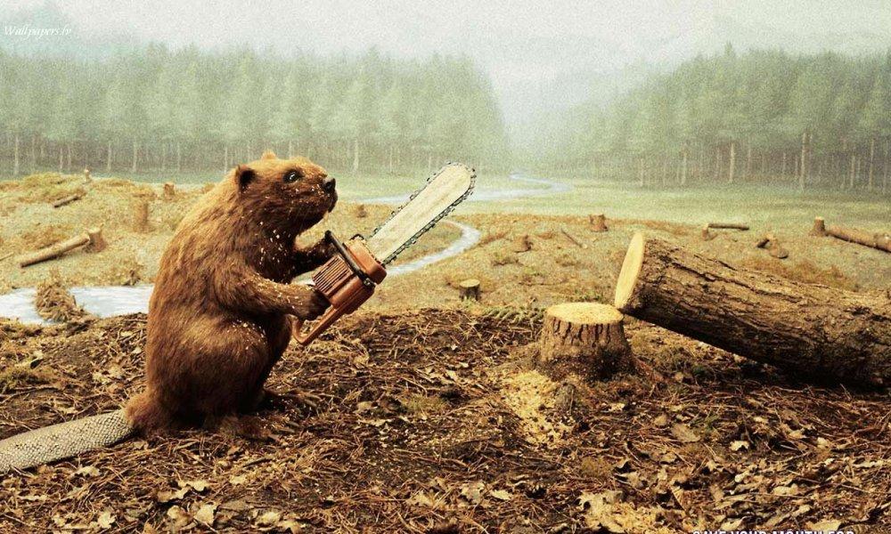 Заказать Валка аварийных и сухостойных деревьев под ключ в Киеве и Киевской области