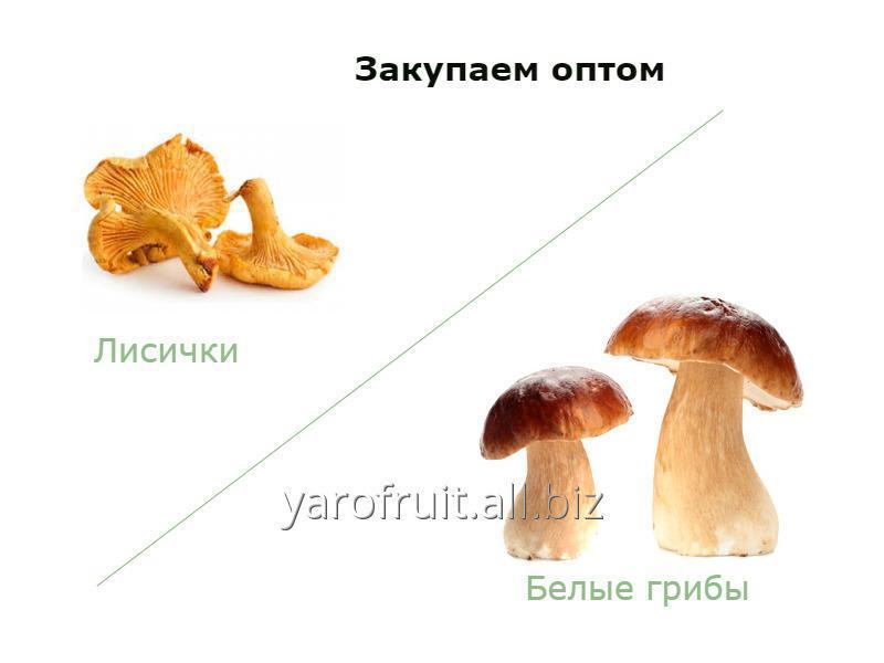 Заказать Грибы (белые грибы, лисички)