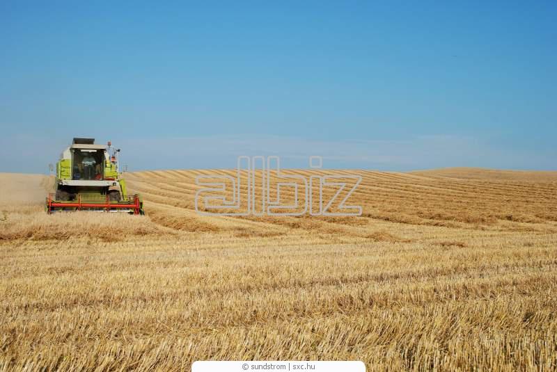 Заказать Аренда зерновозозов, услуги по уборке зерновых