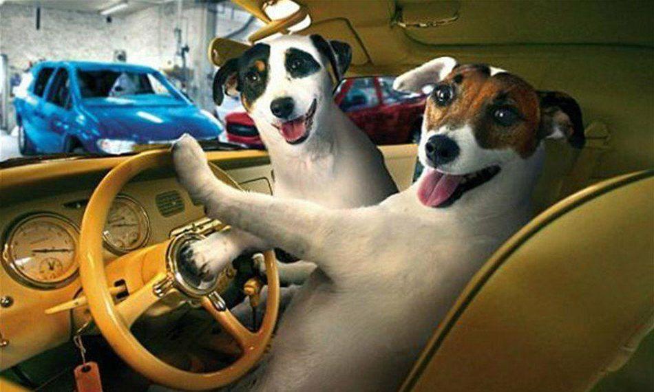 Заказать Транспортировка животных из дома в клинику и обратно