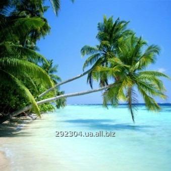 Заказать Горящие туры в Доминикану из Одессы и Киева: все включено, отдых в Доминиканской республлике
