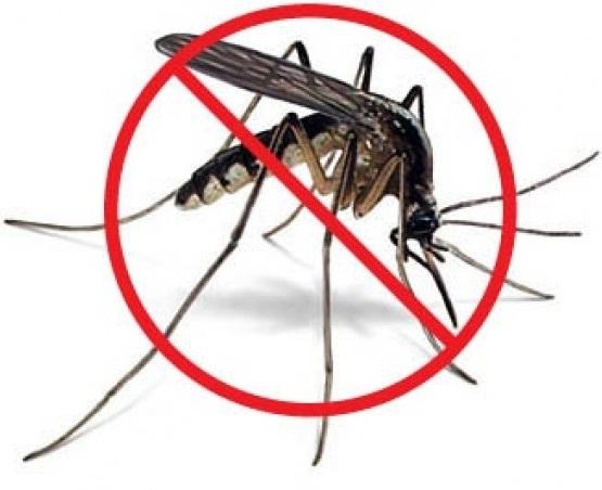 Заказать Борьба с комарами