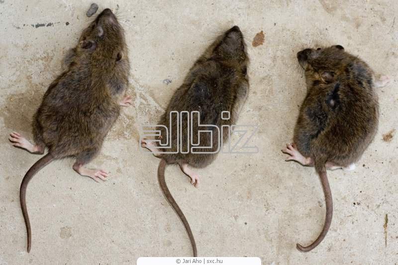 Заказать Уничтожение крыс