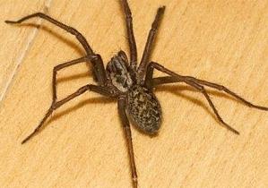 Заказать Уничтожение пауков