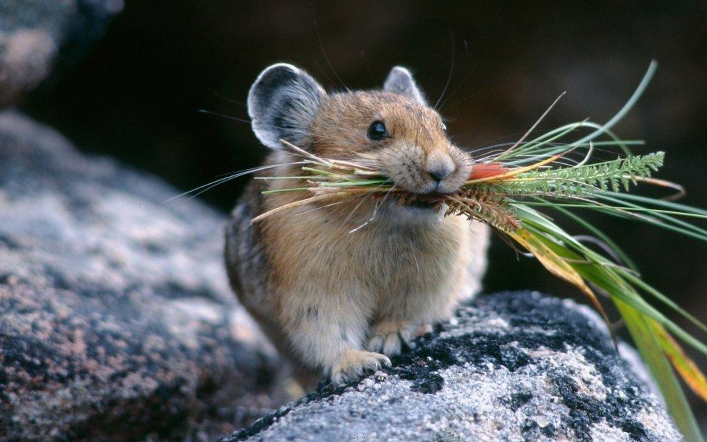 Заказать Уничтожение мышей
