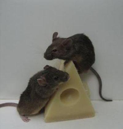 Заказать Борьба с мышами