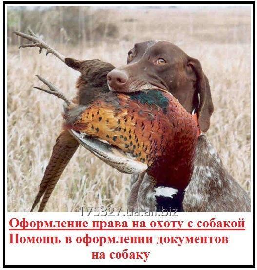 Заказать Документы для охотничьих собак — решаем вопросы с оформлением
