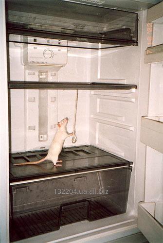 Заказать Ремонт холодильников, холодильного оборудования