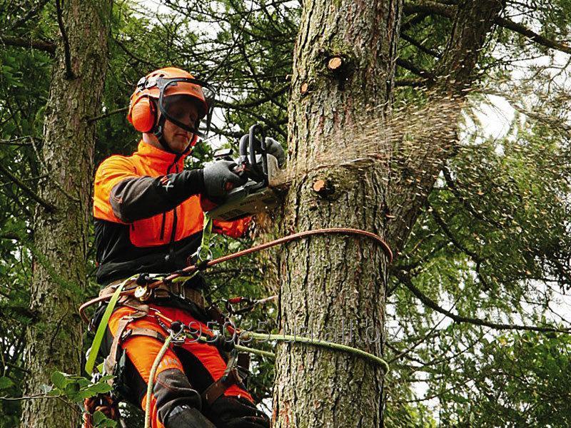 Заказать Спилювання, різання, валка, кронування, видалення, зрізання, обрізання дерев. Арбористика. Порізка дров.