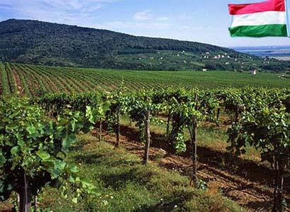 Заказать ВЕНГРИЯ: Рабочий на виноградник